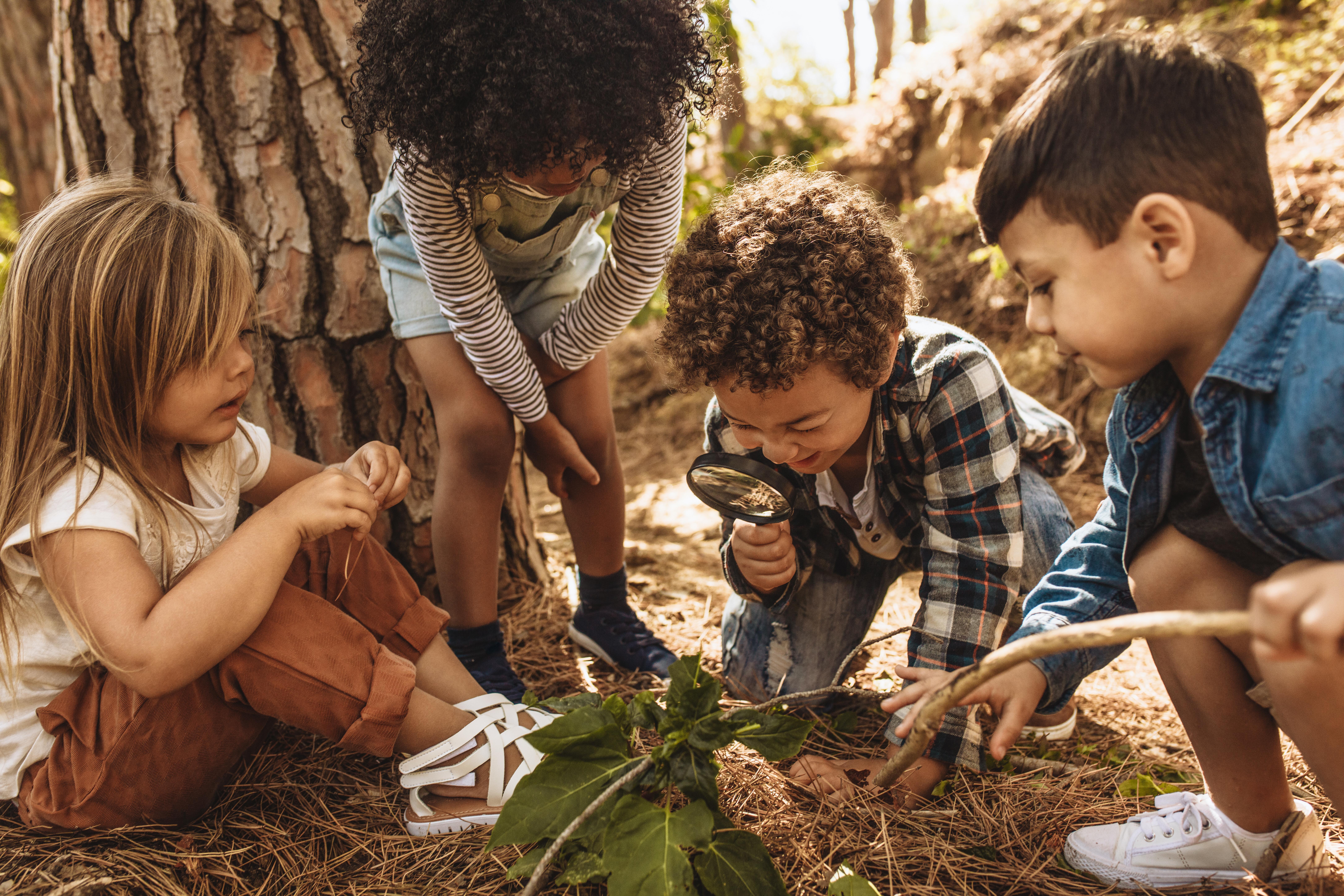 La nature, un terrain d'expérimentation à ciel ouvert pour le développement intellectuel des enfants.